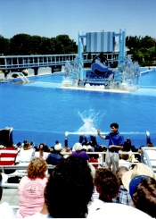My first public interpreting job: Deaf Day at Sea World, July 1990