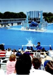 My first public interpreting job: Deaf Day at Sea World, July 1990