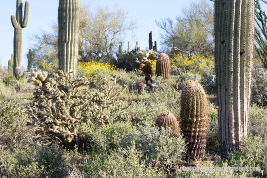 Desert Variation