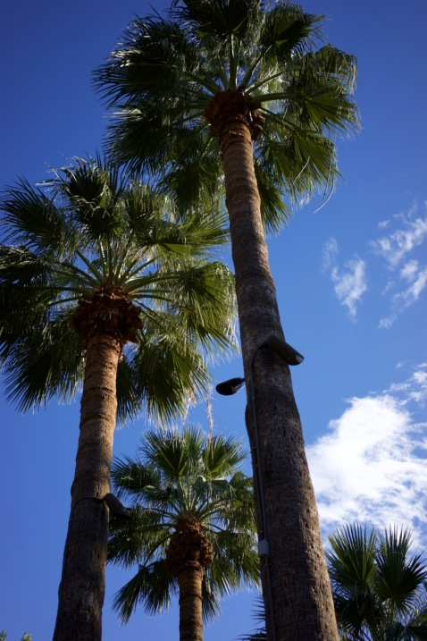Christmas at the Royal Palms - 51